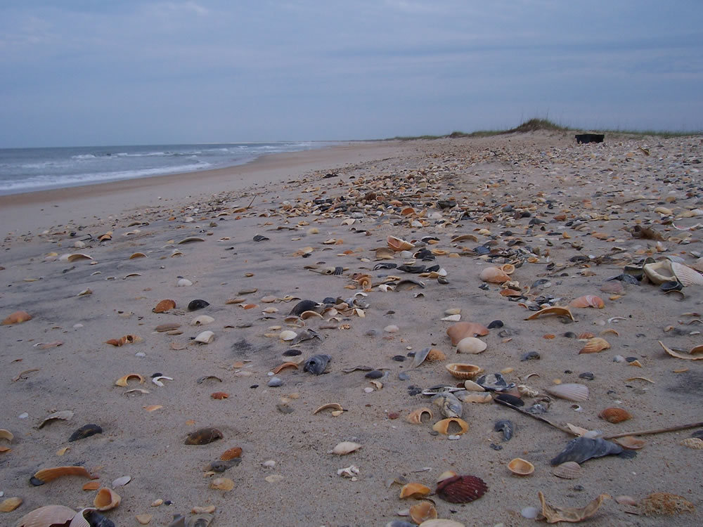 Fossils On Beaches In Florida